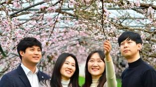[포토뉴스] 청도 시설하우스 꽃망울 터트린 복사꽃